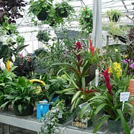 Plants!