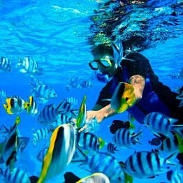 Snorkeling Safari + Picnic Lunch