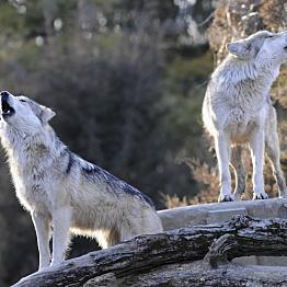 Rock Mountain WildLife Park