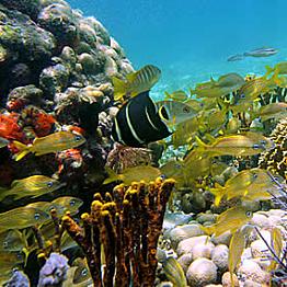Reef Snorkeling Tour