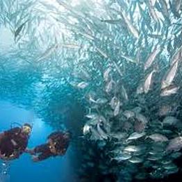 Blue Planet Scuba - Open Water Diving Course