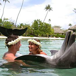 Dolphin Encounter at Moorea Dolphin Center