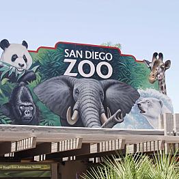 A Trip to San Diego Zoo