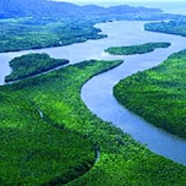 Rainforest Excursion
