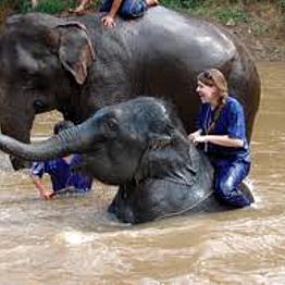 Elephant Sanctuary Day Trip