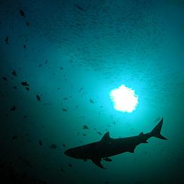 Cape Town Shark Diving