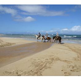 North Shore Beach Horseback Riding