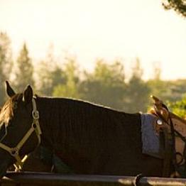 Two-Hour Horseback Ride through Grand Teton National Park