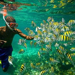 Snorkel Under The Sea