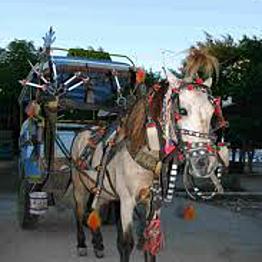 Donkey ride on the Gili Islands