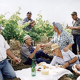 A proper wine tasting