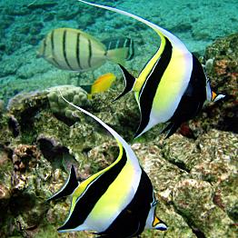 Snorkeling rentals