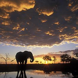 Game Drive in Botswana