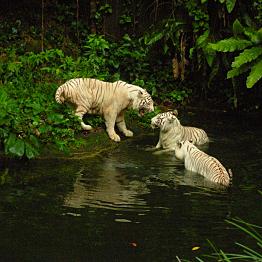 Singapore Zoo Night Safari