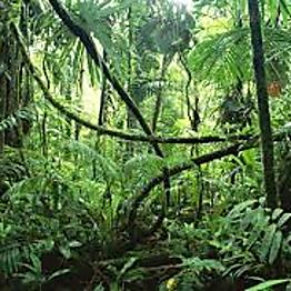 Jungle Excursion