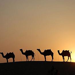 Overnight camel trip into the Thar Desert