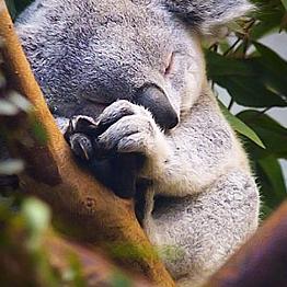 The Koala Sanctuary!