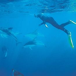 Tour: Kaikoura Wild Dolphin Swim