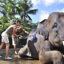 Elefantastic Splurge