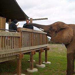 Elephant Extravaganza!