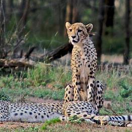 Getting to Kruger National Park