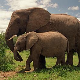 Addo Elephant Park Guided Safari