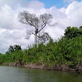 Monkey River Boat Ride