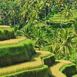 Malaysian Plantations