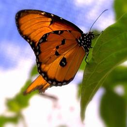 Visit Aruba's Butterfly Farm
