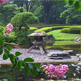 Visit a Japanese Garden