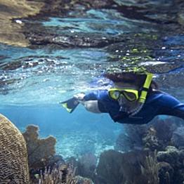 Barrier Reef Snorkel Tour