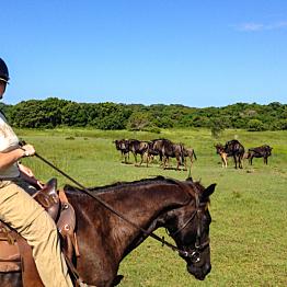 Horseback safari!