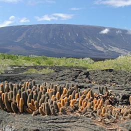 Galapagos Cruise: Day 3