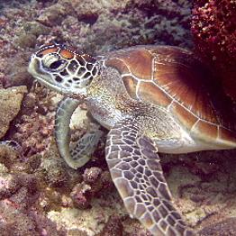 Galapagos Cruise: Day 4