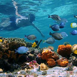 Snorkeling on the Coast