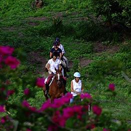 Antigua Equestrian Centre