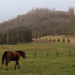 Horseback Riding – Stables at Koele