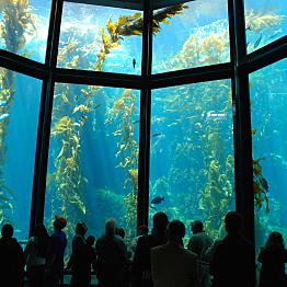 The Aquarium in Monterey