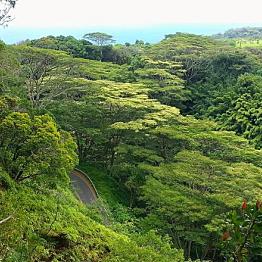 Road to Hana Hiking and Waterfall Tour
