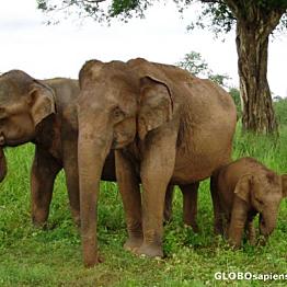 Sri Lanka: Udawalawe National Park