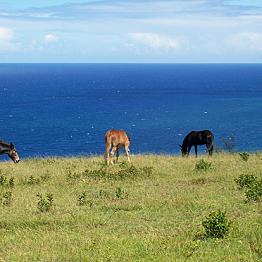 Travel by donkey