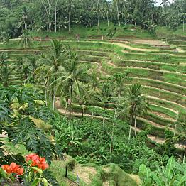 Accomodations in Ubud