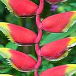 Botanical Gardens Pura Vida