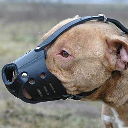 Kublai's new muzzle
