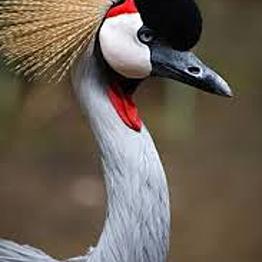 Activity:  Wildlife Sanctuary!