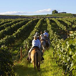 Activity: Horseback Wine Tasting Tour