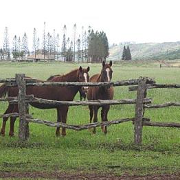 Horseback riding in Lana'i