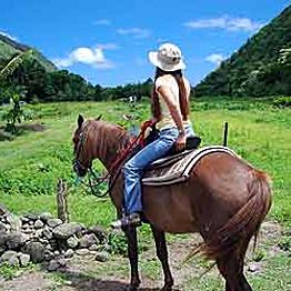 Horseback Riding Through the Tropical Rainforest