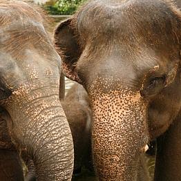 Elephant Safari Park