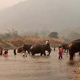 Elephant Nature Park visit